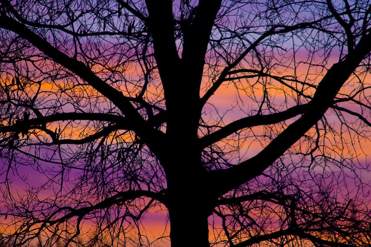 Byng Sunrise C.jpg