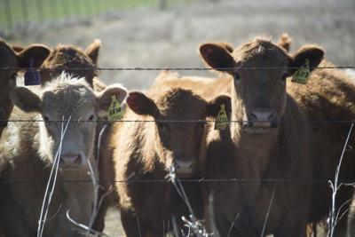 Register now to attend OSU Beef Industry Conference