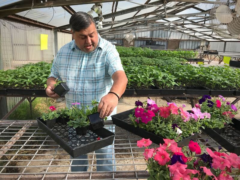 Byng Horticulture to host Mother's Day plant sale