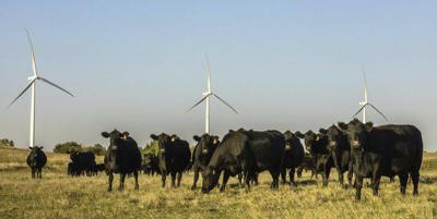 Apex offering chance to learn about proposed wind farm