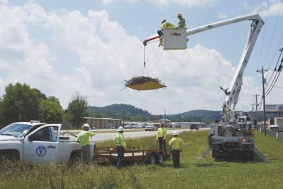 AEC crews working to move osprey nest in Warrenton