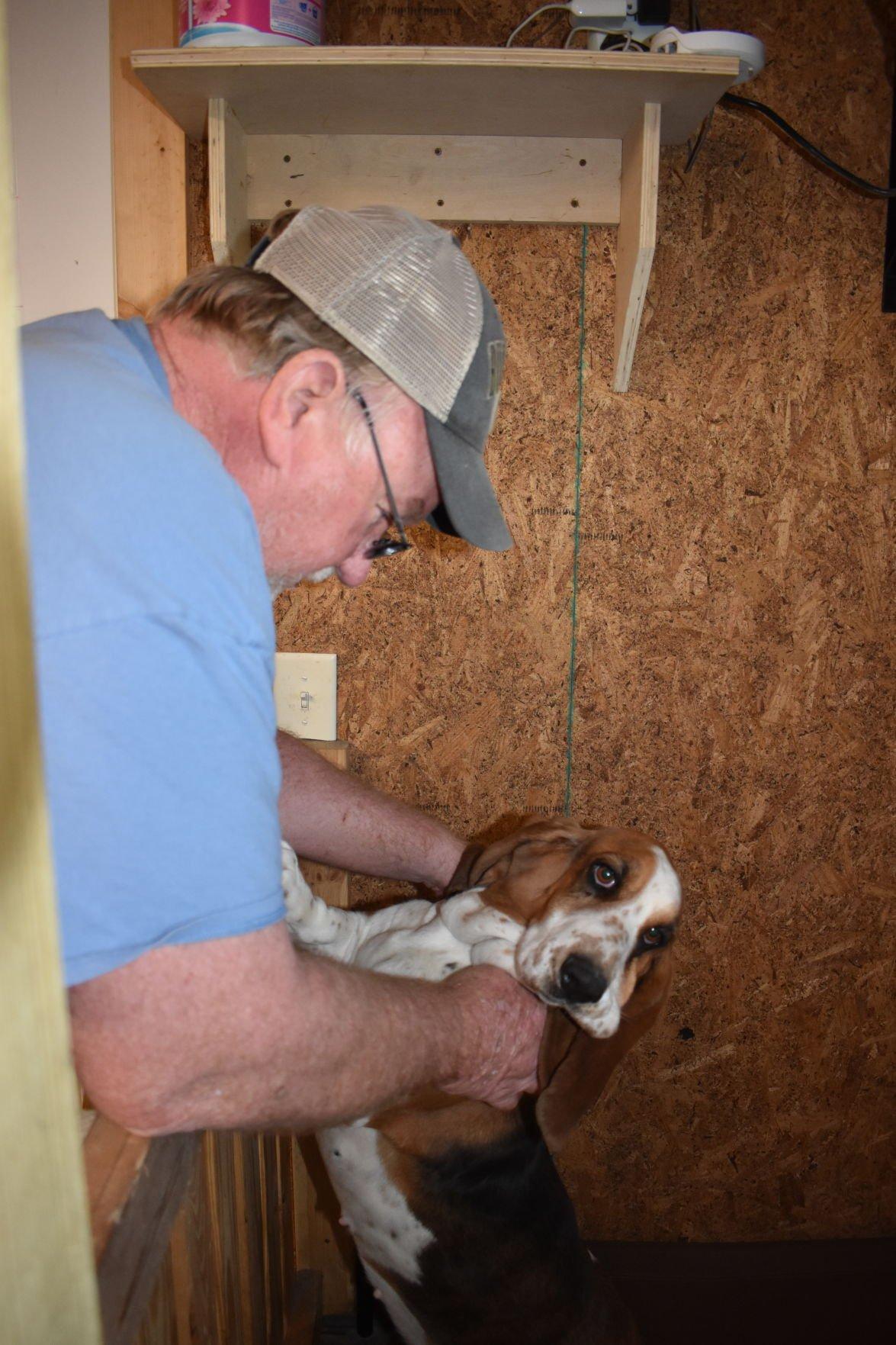 basset hound breeding2