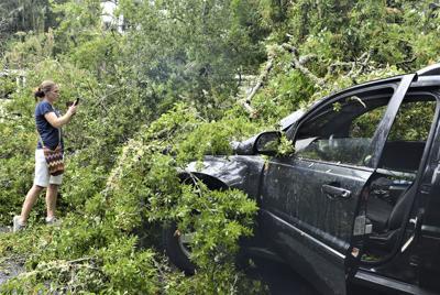 061319_fallen tree