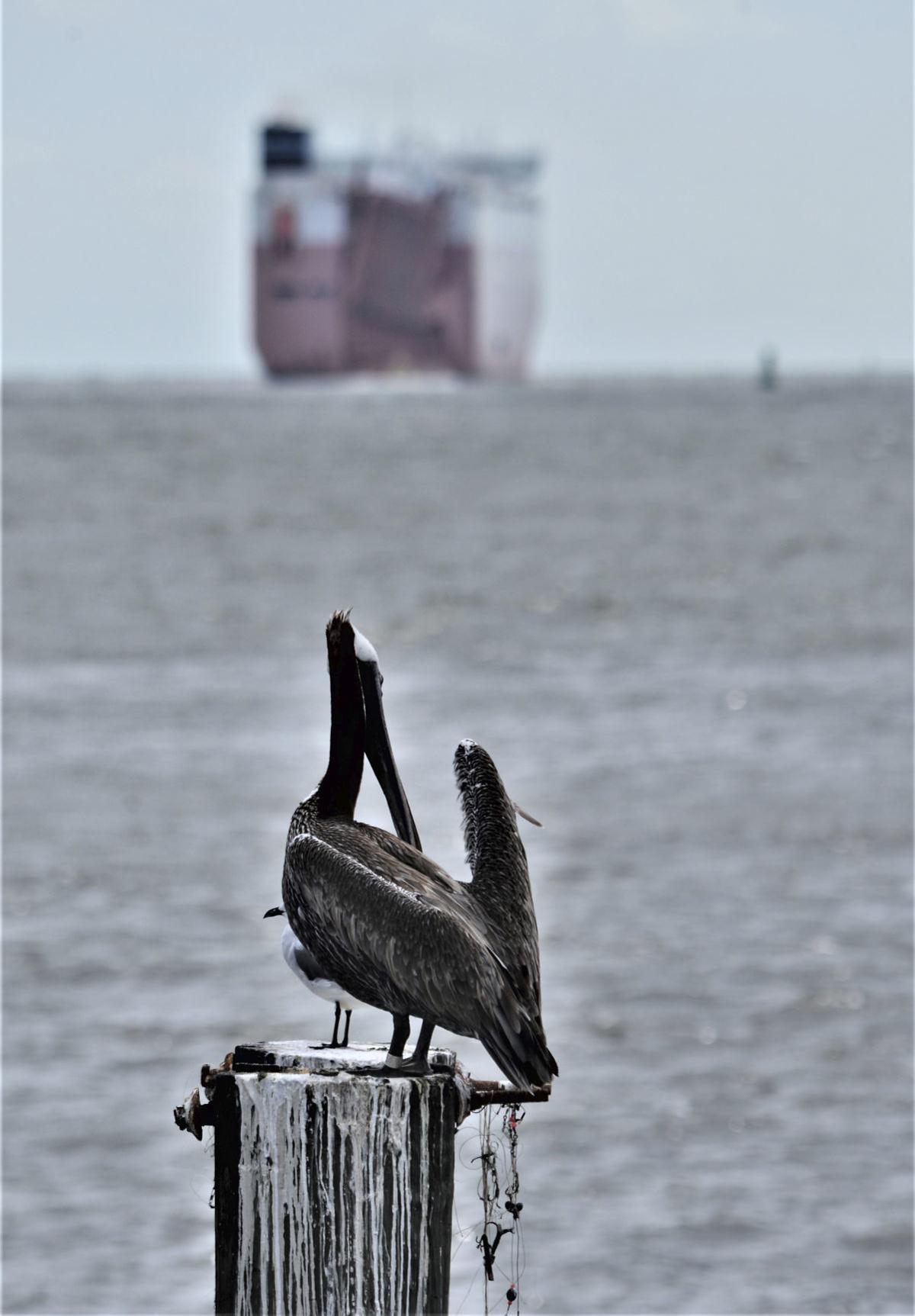 091419_pelicanship