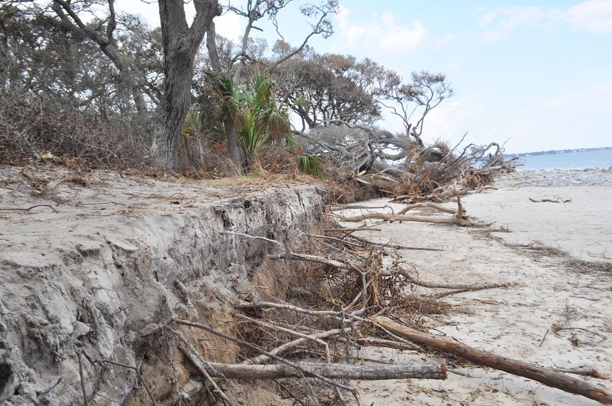 Erosion Driftwood