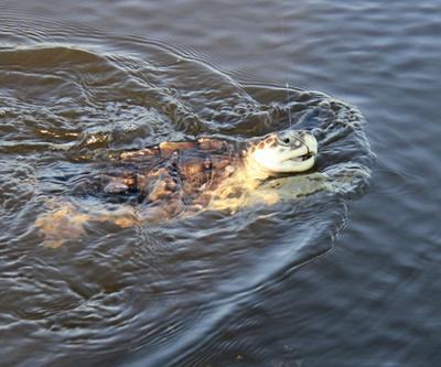 050515_turtles
