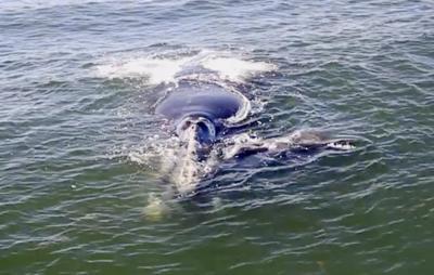 011219_whale