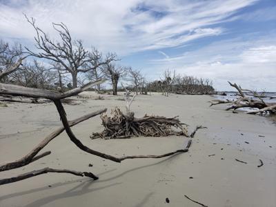 hurricane aftermath jekyll