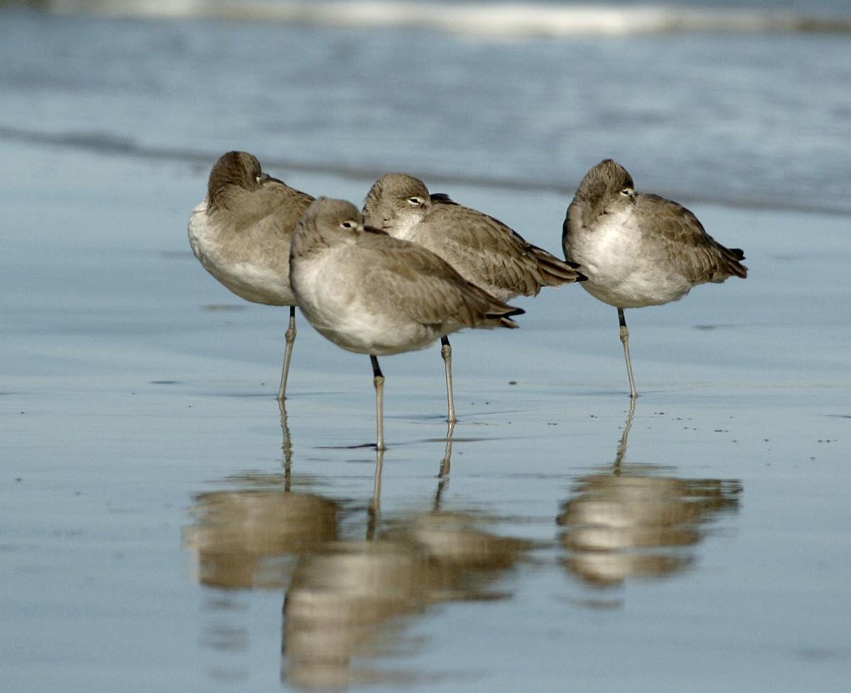061719_birds 3