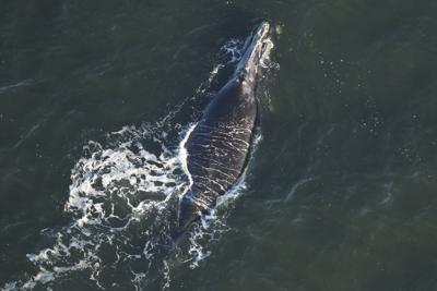 010219_whale