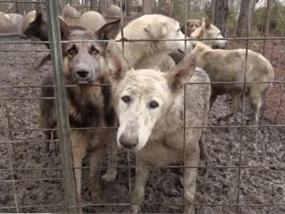 Glynn County Animal Control Personnel Assist In Candler County Dog Hoarding Case Local News