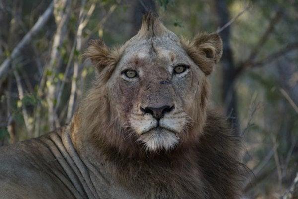 021320_lion