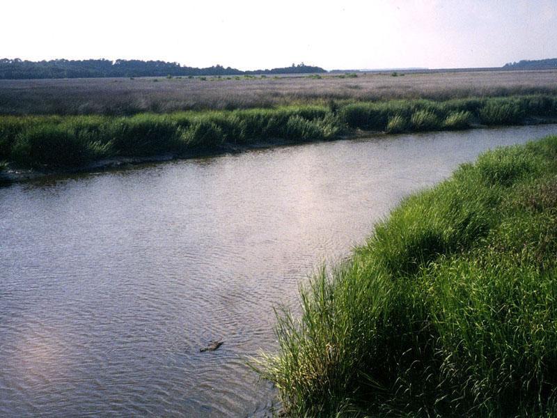 Image result for Dunbar Creek on St. Simons Island