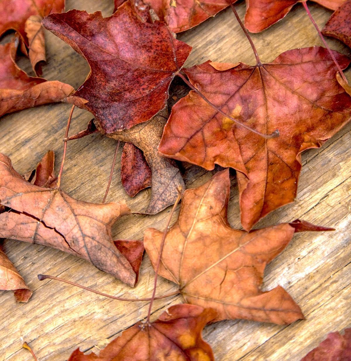 Autumn equinox heralds beginning of fall