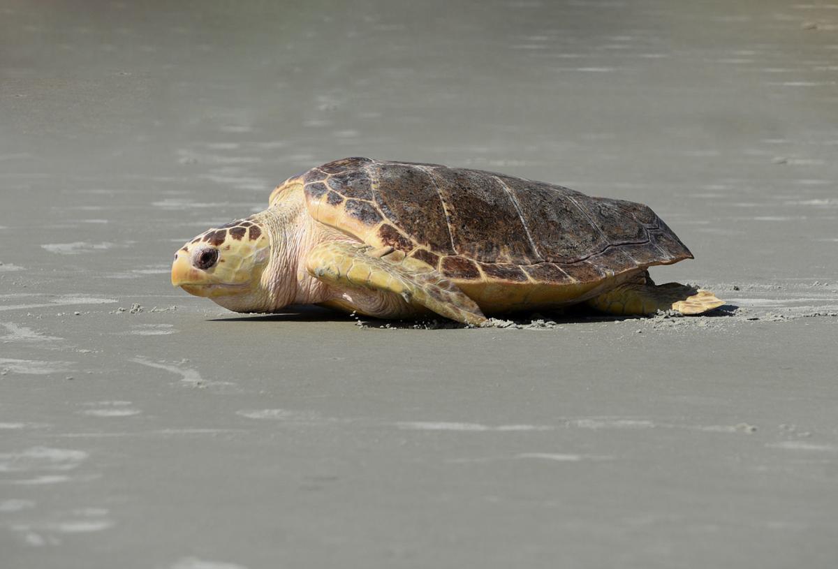 070619_turtle 1