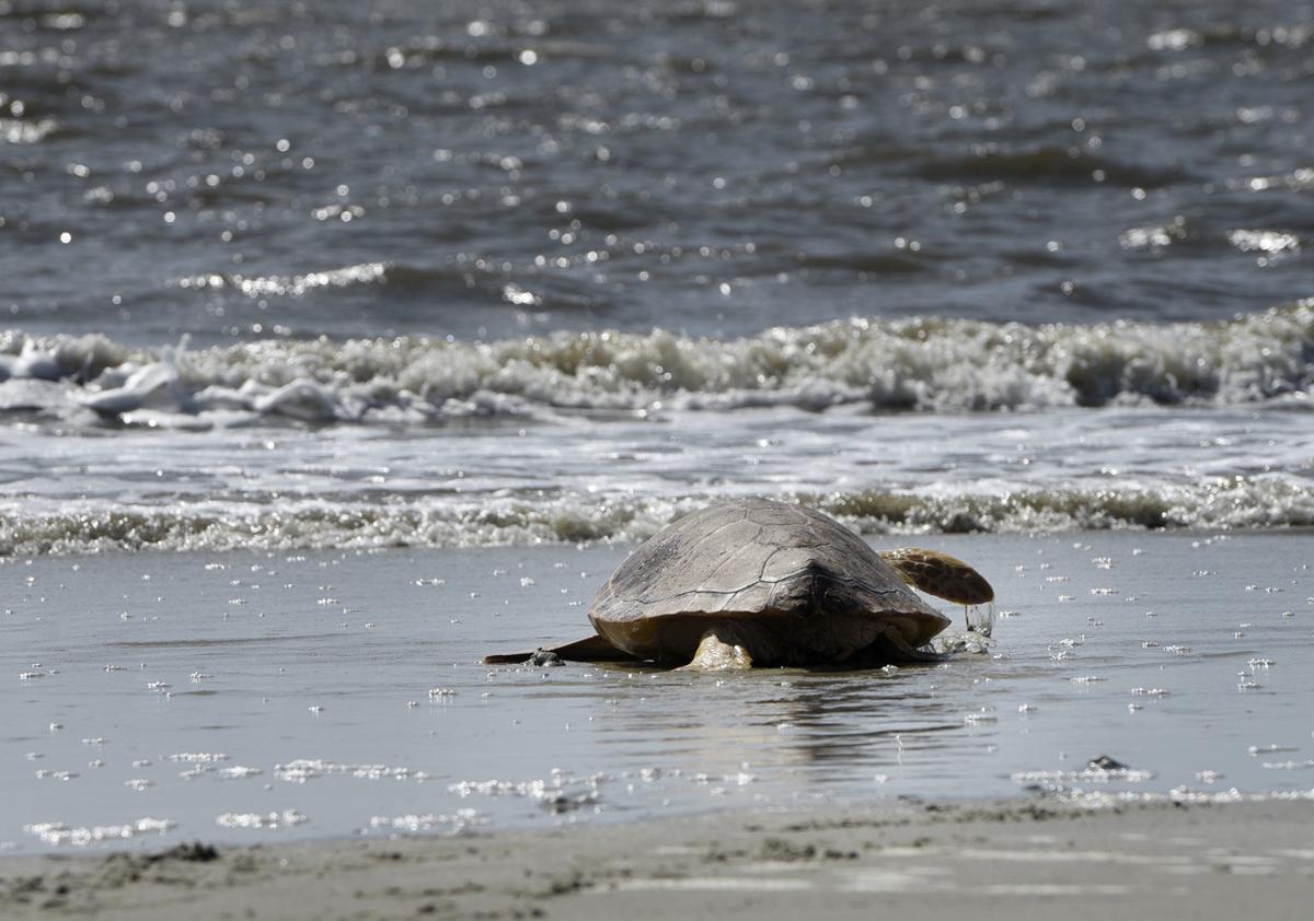 070619_turtle 2