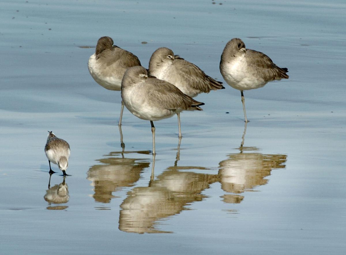 051218_birds 5