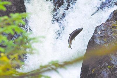 Tribal Fishing Legislation