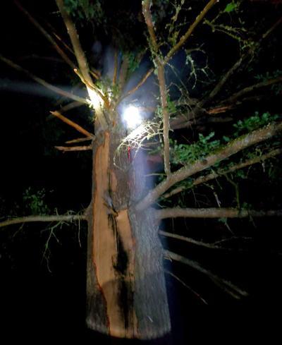 Tree fire.tif