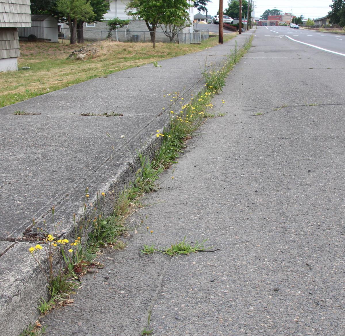 St. Helens Street Weeds