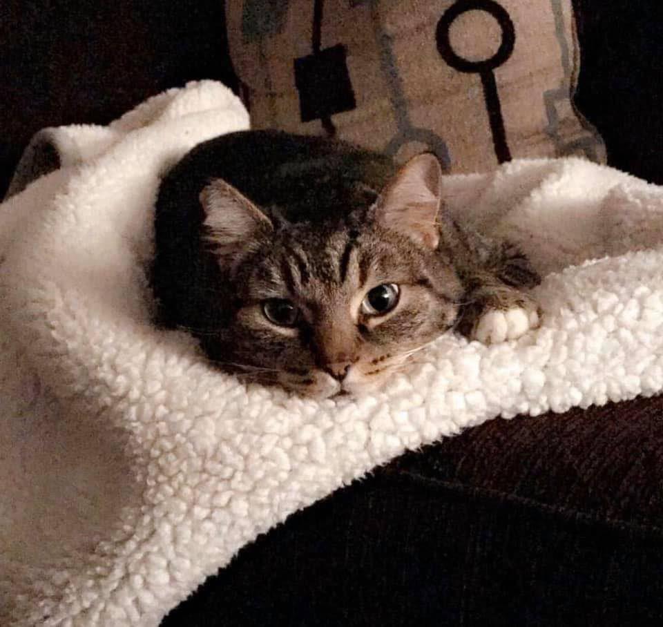 Chester the cat.jpg