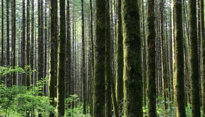 Timber cash