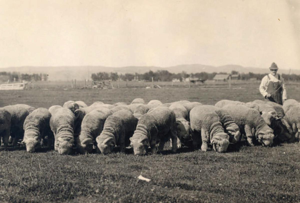 Offbeat Oregon History: Range-wars veteran put Oregon on map as sheep country