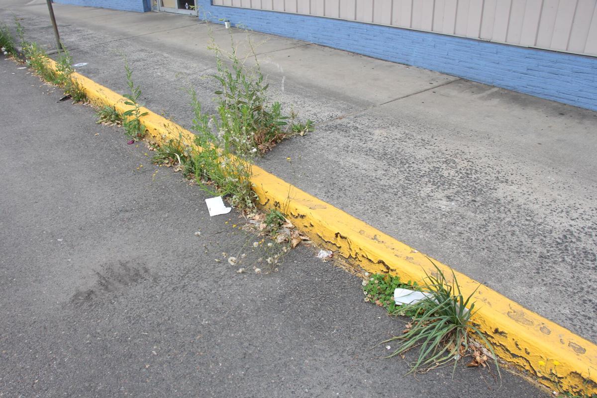 Columbia Boulevard Weeds