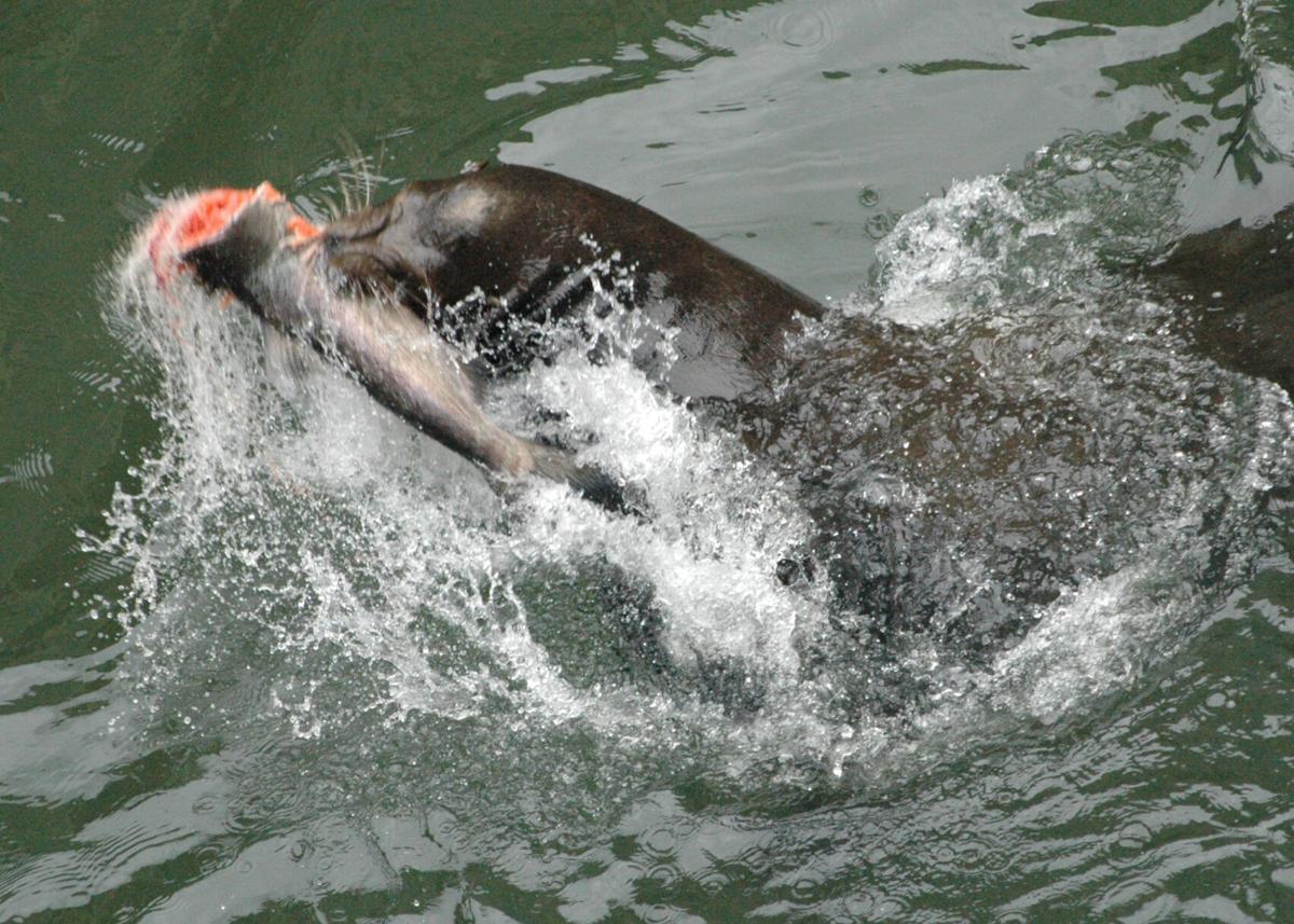 Sea Lion Concerns