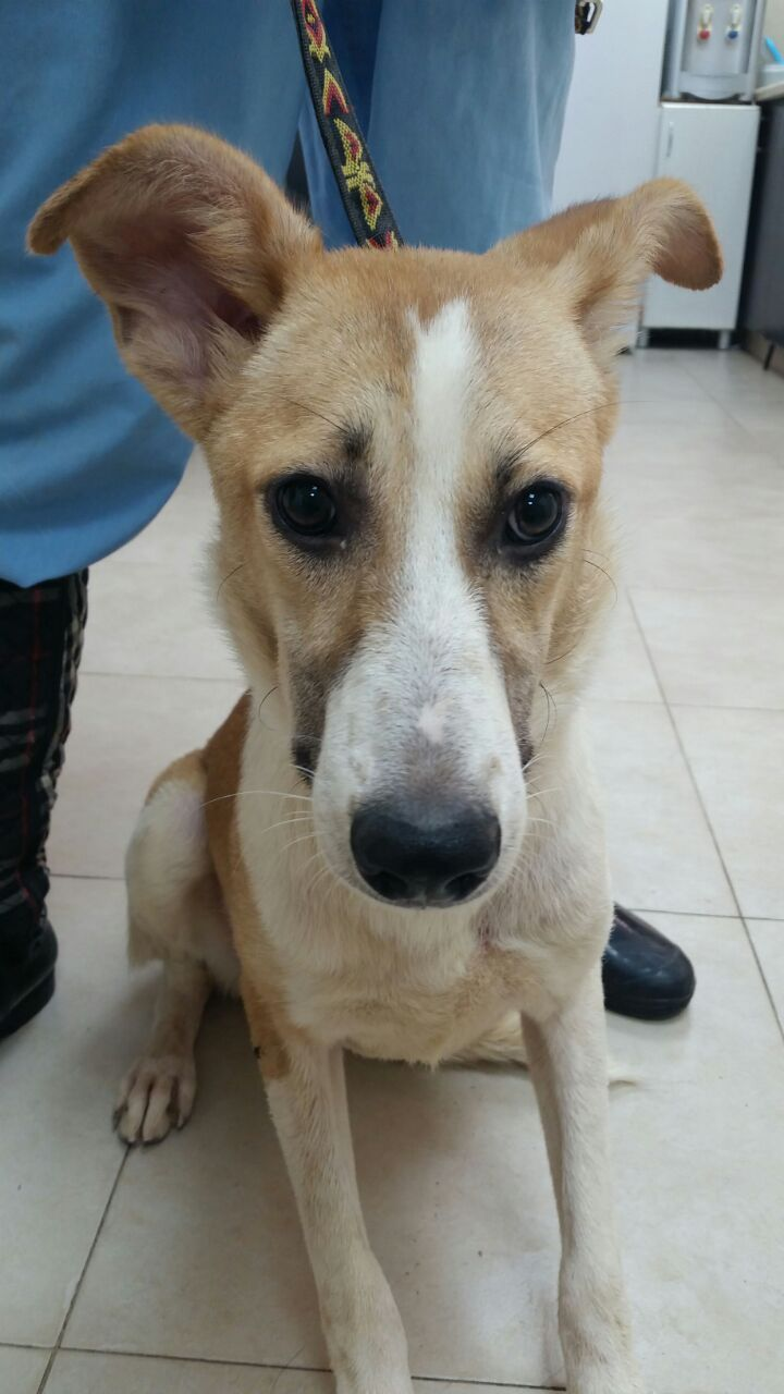 B & B Auto Sales >> Dogs from Israel arrive in St. Helens looking for a home ...