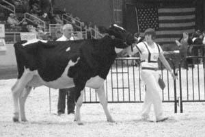 Warren County 4-H members place at state dairy show