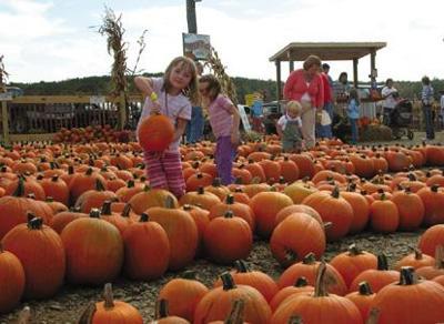 Port Farms opens for falltime fun