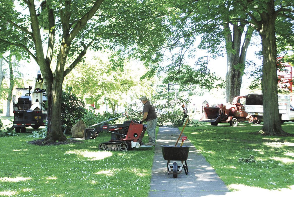 Tree cleanup in city park