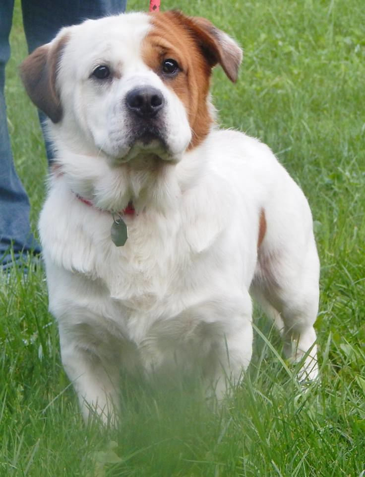 FUREVER HOMES: Pets of the Week | News | thecourierexpress com