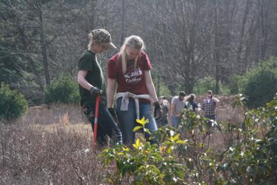 Students look over saplings
