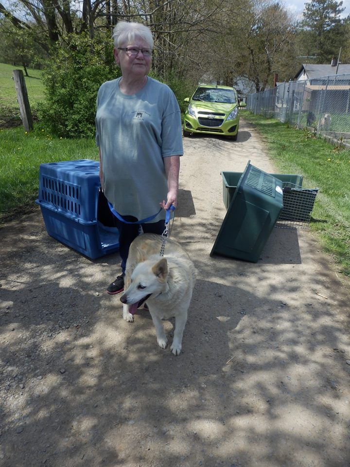 A REASON TO RESCUE: Animal sanctuary closes, local shelters
