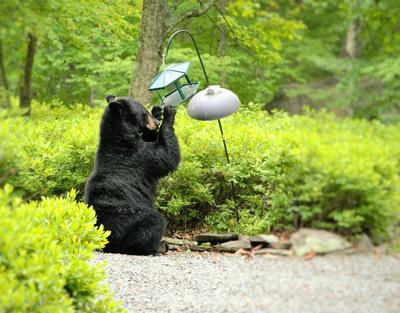Bear and bird feeder