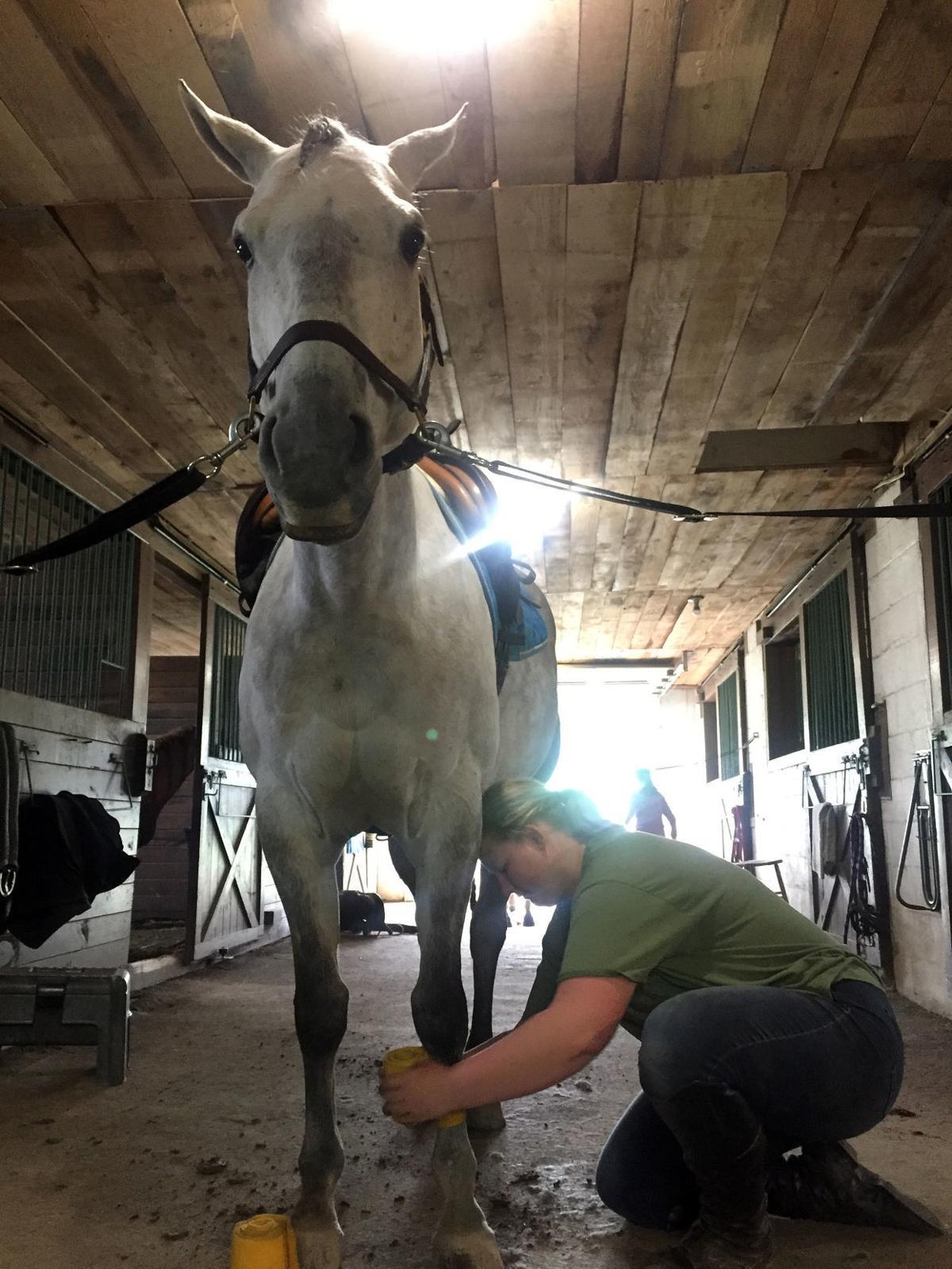 Horse Prep