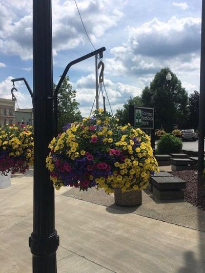 Grant flowers