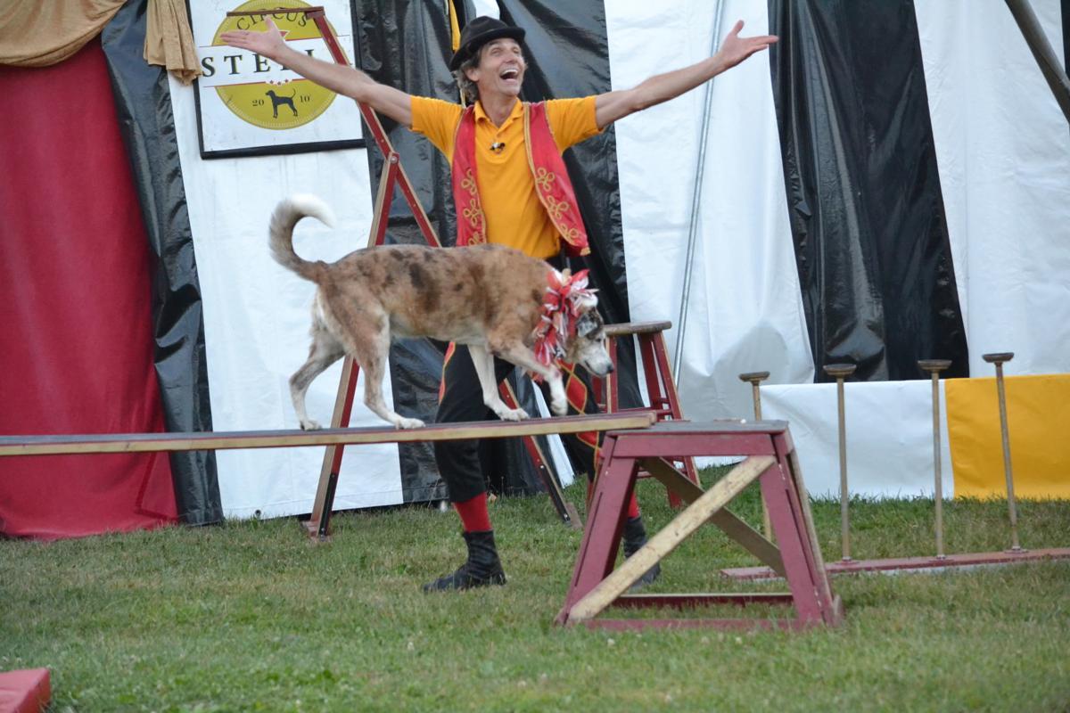 Stella Circus 7
