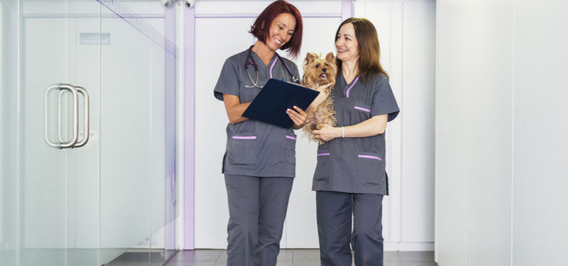 How to become a veterinary receptionist