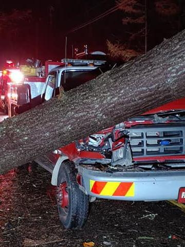 Fire truck with tree