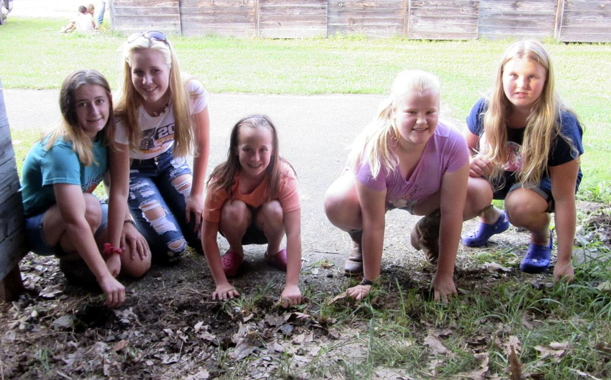 4-Hers pulling weeds at 4-H horse barn