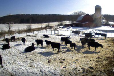 Conservation Corner: Managing livestock this winter