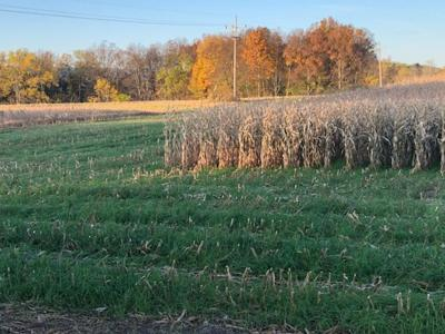 Planting cover crops?