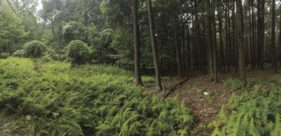 CONSERVATION CORNER: Clearcutting: Small scale, big reward forest management tools
