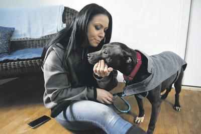 Shelter: Rescued dogs are improving, still fearful