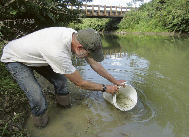 Volunteersstock local creek with baby eels