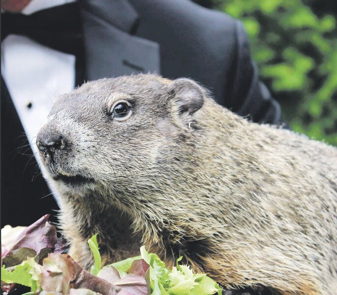 Groundhog Day is leader among weather myths