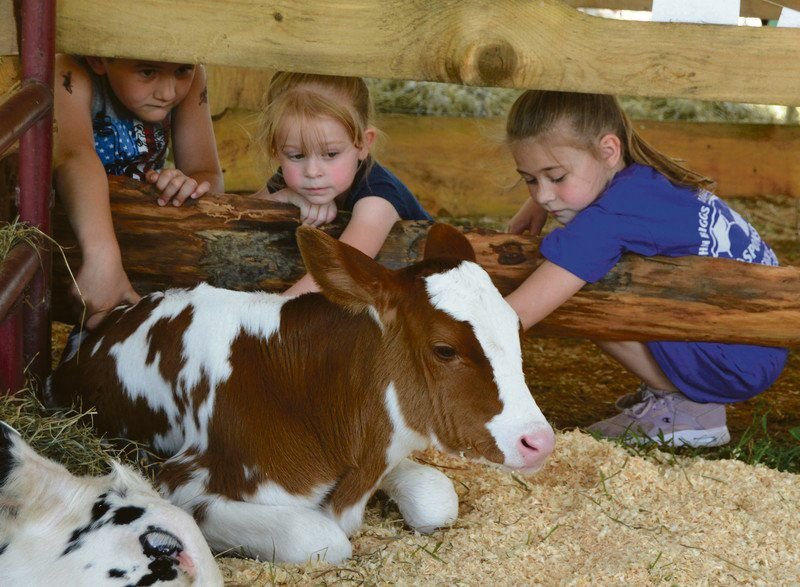 Dairy Fest returns with moo-mentum